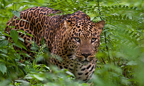 Bandipur National Park tour packages in paravur